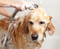 The Dog House: Dog Grooming and Dog Boarding, 325-949-2194